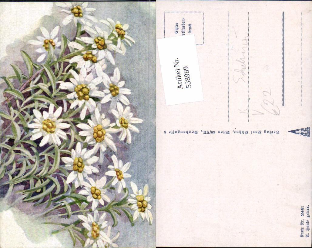 538989 deutscher schulverein 2481 a hanke blume edelweiss ansichtskarten motive thematik. Black Bedroom Furniture Sets. Home Design Ideas